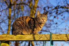 Ilustrační snímek - Kočka