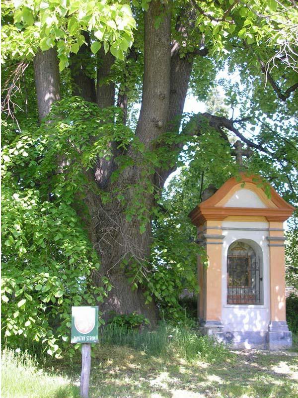 Lípa u sv  Vojtěcha, obrázek se otevře v novém okně